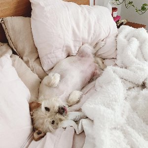 Can we just lay in bed all day? #mondaymood